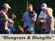 bluegrass-bluegills
