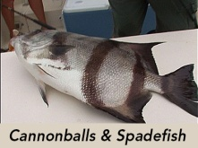 cannonballs-and-spadefish-tv
