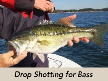drop-shot-bass