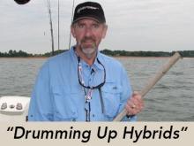 drumming-up-hybrids