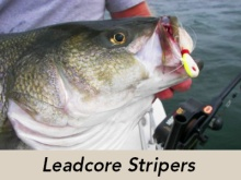 leadcore-stripers