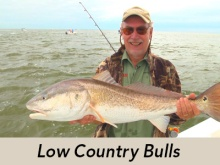 low-country-bulls-icon