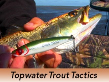 Pro-Tip-Topwater-Trout-Tactics