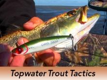 Pro-Tip-Topwater-Trout-Tactics