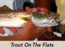 steinhatchee-trout-icon