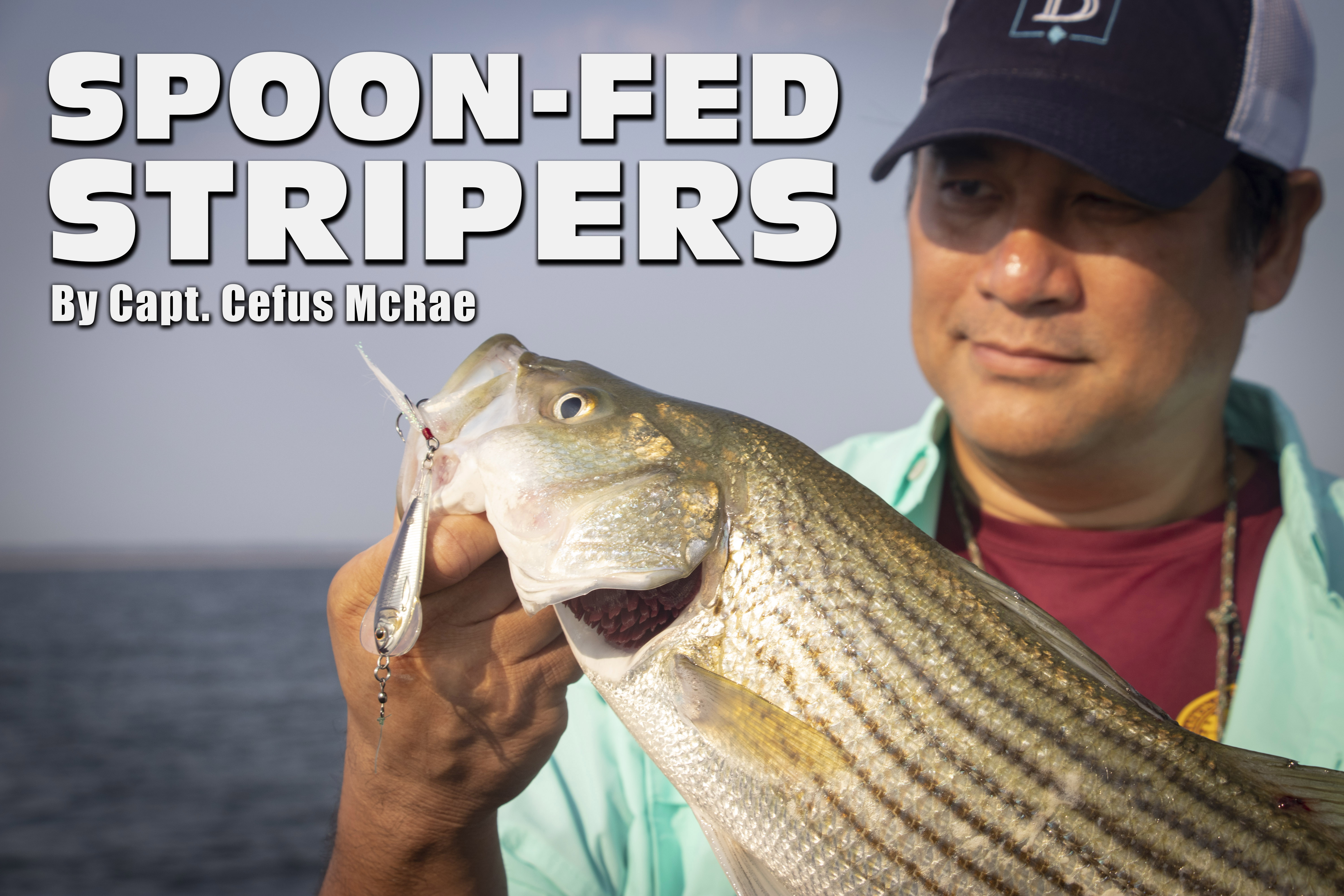 CM Spoon Fed Stripers ENTRY